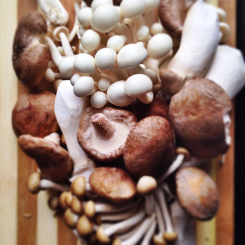 Mushroom Phyllo Roll